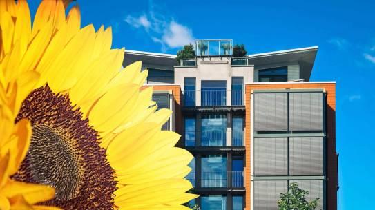 De un girasol a la innovación. Cómo la compañía SolarGaps surgió a partir de una idea